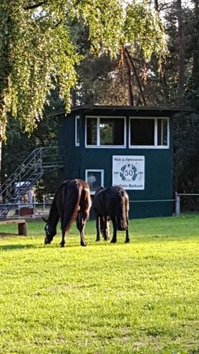 Unsere Pferde beim Grasen